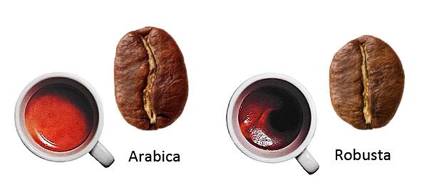 Arabica - Robusta